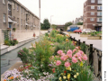 Morice-Town-planting