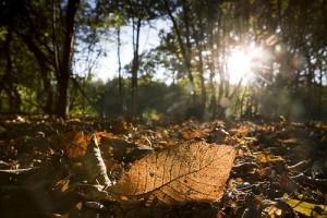 4349967-leaves